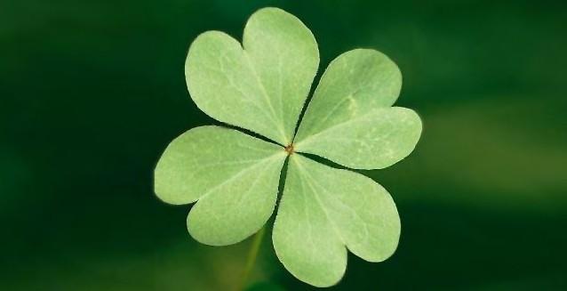 Petaloso dimostra che il successo dipende solo dalla fortuna